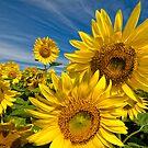 Sunny Days by Bill Maynard