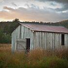 Morning Light by Jodi Turner