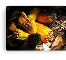 fallen pandanus fruit Canvas Print