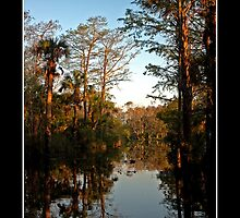 Florida River - - Posters & More by Maria A. Barnowl