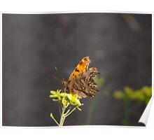 Alighitng On a Flower Poster