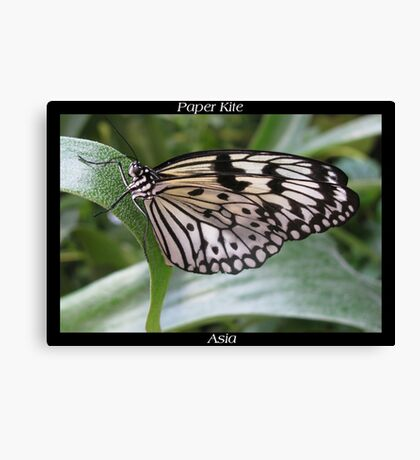 Butterfly (Asia) ~ Paper Kite Canvas Print