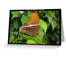 Butterfly (Central America) ~ Rusty-tipped Page Greeting Card