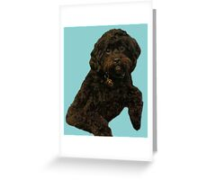 Cute and Curly Shoodle Puppy Greeting Card