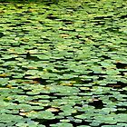Lost in a stream of lily pads... by Heather Butler