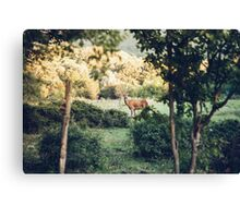 Lone Deer  Canvas Print