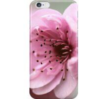 Cherry Pink iPhone Case/Skin