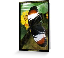 Butterfly (S. America) ~ H. heurppa Longwing Greeting Card
