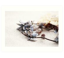 Shell Necklace Art Print