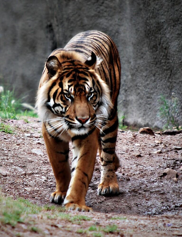 Sumatran Tiger by Saija  Lehtonen