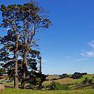Pine trees, Old Kilcunda, Gippsland, Victoria. by johnrf