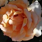 Perfectly Peach by Susan Moss