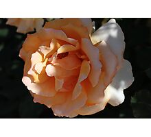Perfectly Peach Photographic Print