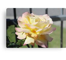 Rosa Peace Metal Print