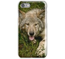 Dog Days Of Summer iPhone Case/Skin