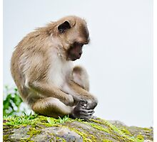 monkeys in the jungle Photographic Print