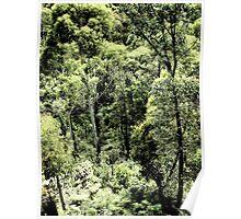 gum trees Poster