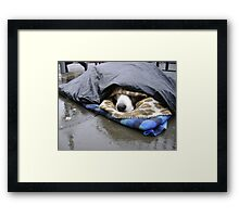 Dumper (street seller's dog) Framed Print