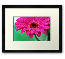 Bright Hot Magenta Pink Pretty Gerbera Daisy Petals  Framed Print