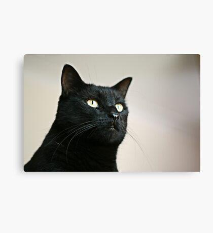 Panther Eyes Canvas Print