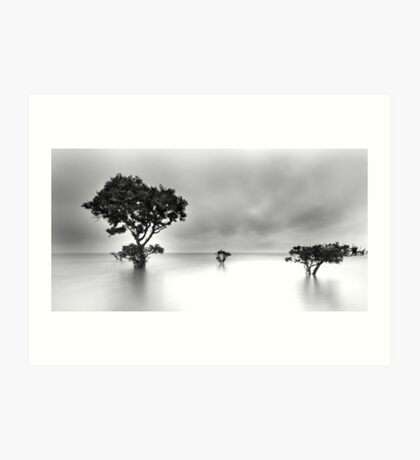 Gray Dawn - Cleveland Point Qld Art Print