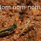 Hungry Locust at Apollo Bay by StrangEnQuirkY