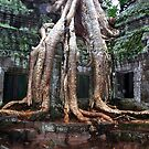 Temple Roots by John Dalkin