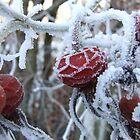 Frozen Hedgerow by emmar