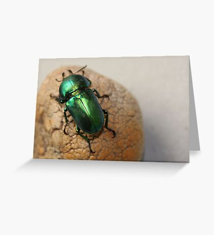 Iridescent Green Christmas Beetle Greeting Card