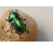 Iridescent Green Christmas Beetle Photographic Print