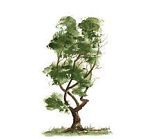 Little Zen Tree 140 Photographic Print
