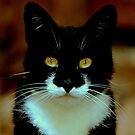 Black pussy cat, white bib beautiful eyes, seeks owl for pea pod voyage by Alan Mattison
