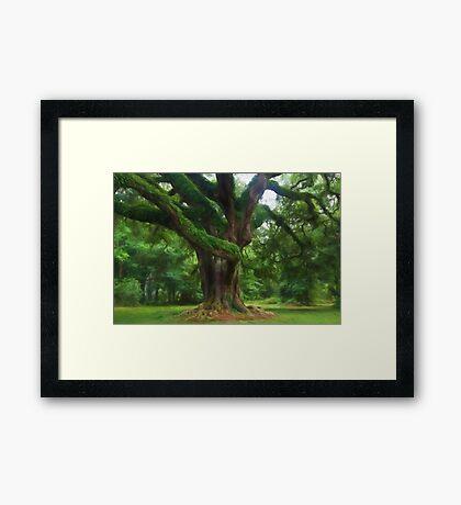 Fantasy Oak Framed Print