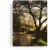 nature's alleyway vector Canvas Print