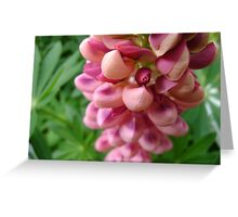 tender loving (lupin flower) Greeting Card