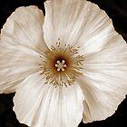 My Sepia Poppy by HEIDI  HORVATH