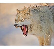 Anger display Photographic Print