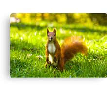 Hello, I love you, now gimme food Canvas Print