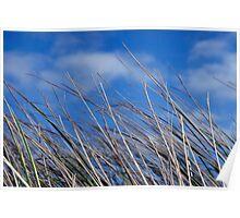 calm tall doon blue grass Poster