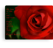 A Red, Red Rose, My Love Is Like Canvas Print