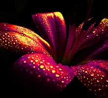 Lily Crystal. by Vitta