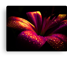 Lily Crystal. Canvas Print