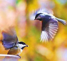 Chickadees by erinshortridge
