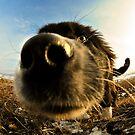 Nosy by vessybuzz
