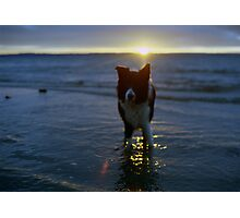 Indy At the Sunset  Photographic Print