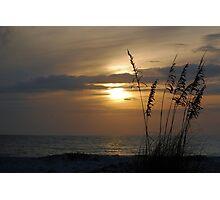Sunset through sea oats Photographic Print