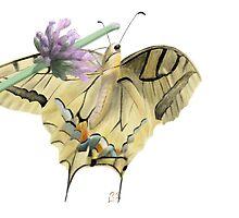 Papilionidae by Arthropodart