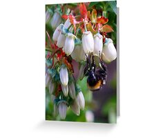 Busy Little Bee. Greeting Card