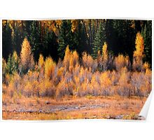 Autumn bushes Poster
