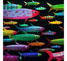 Fishes Photographic Print